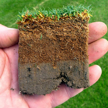 If water runs off without penetrating the grass, then it may be time to dethatch the lawn.