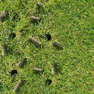 Aeration involves perforating the soil with small holes to allow air, water and nutrients to penetrate the grass roots.