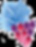 BleuCellar_Grapes_Transparent.png