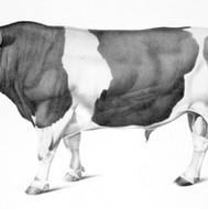 Toro Holstein