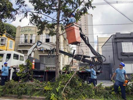 Mandato da Vereadora Noemia Rocha pede poda de árvores do bairro Umbará