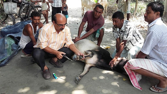 Livestock treatment cum vaccination camp