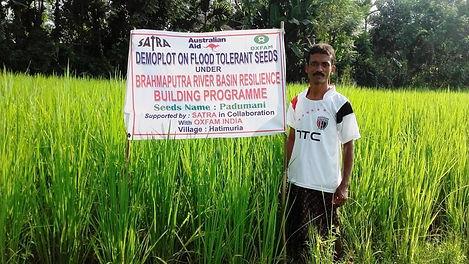 Demo plot on Flood Tolerant paddy seed a