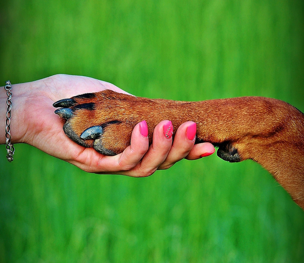 We can shake hands and paws as well (Image by Yama Zsuzsanna Márkus from Pixabay)