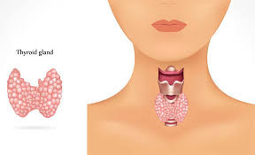 Is Your Thyroid Healthy?