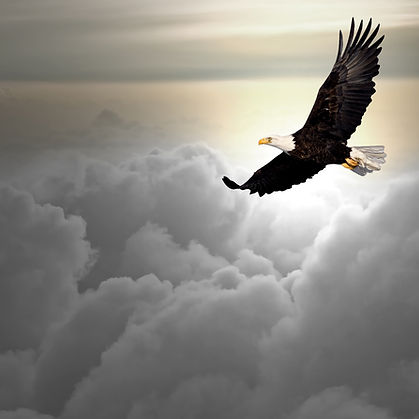 Bald eagle flying above the clouds.jpg