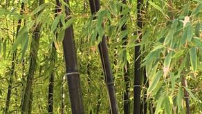 Bamboo: The Unity of the Vietnamese Spirit