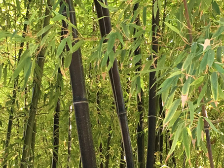 Bamboo: The Unity of the Vietnamese Spirit