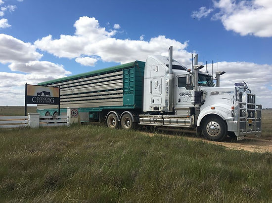 Falls Livestock Transport Trucks