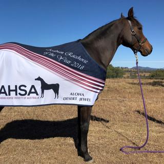 Jewel AHSA Arabian Racehorse of the year