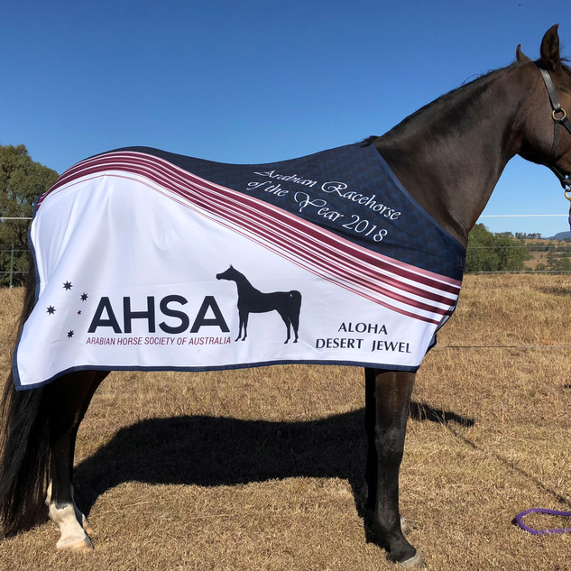 Jewel AHSA Arabian Racehorse of the year