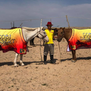 Gobi Desert Cup