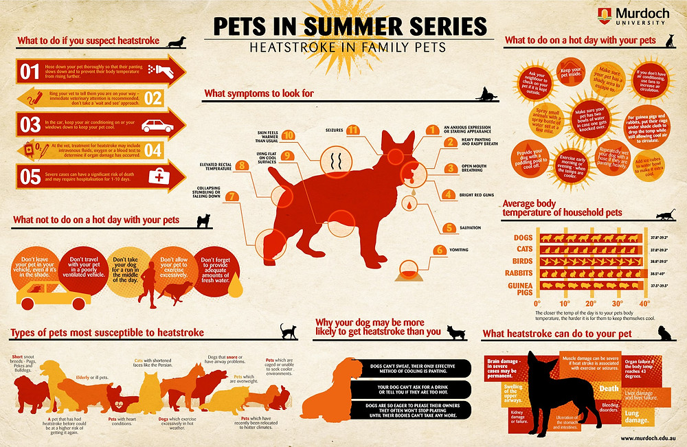Murdoch University Pets In Summer Heatstroke Series