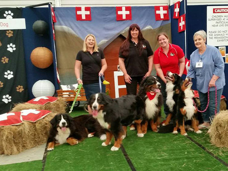 Guest Post: Joining a Dog Club - here's why we love it!
