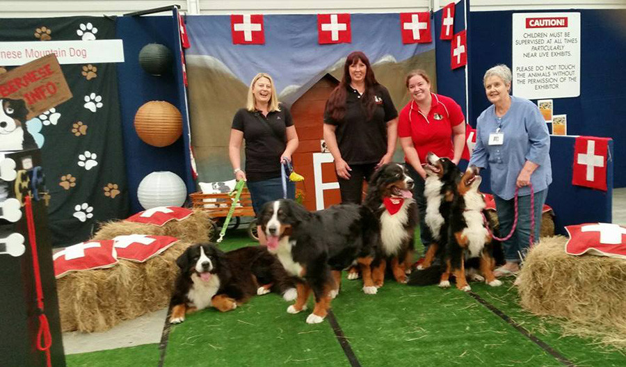 Bernese Mountain Dog Club Stand
