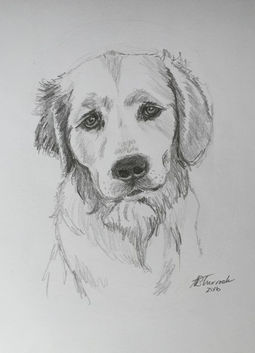 Bayside businesses australia baysidedogownersgroup michelle sturrock art original pet portraits solutioingenieria Images