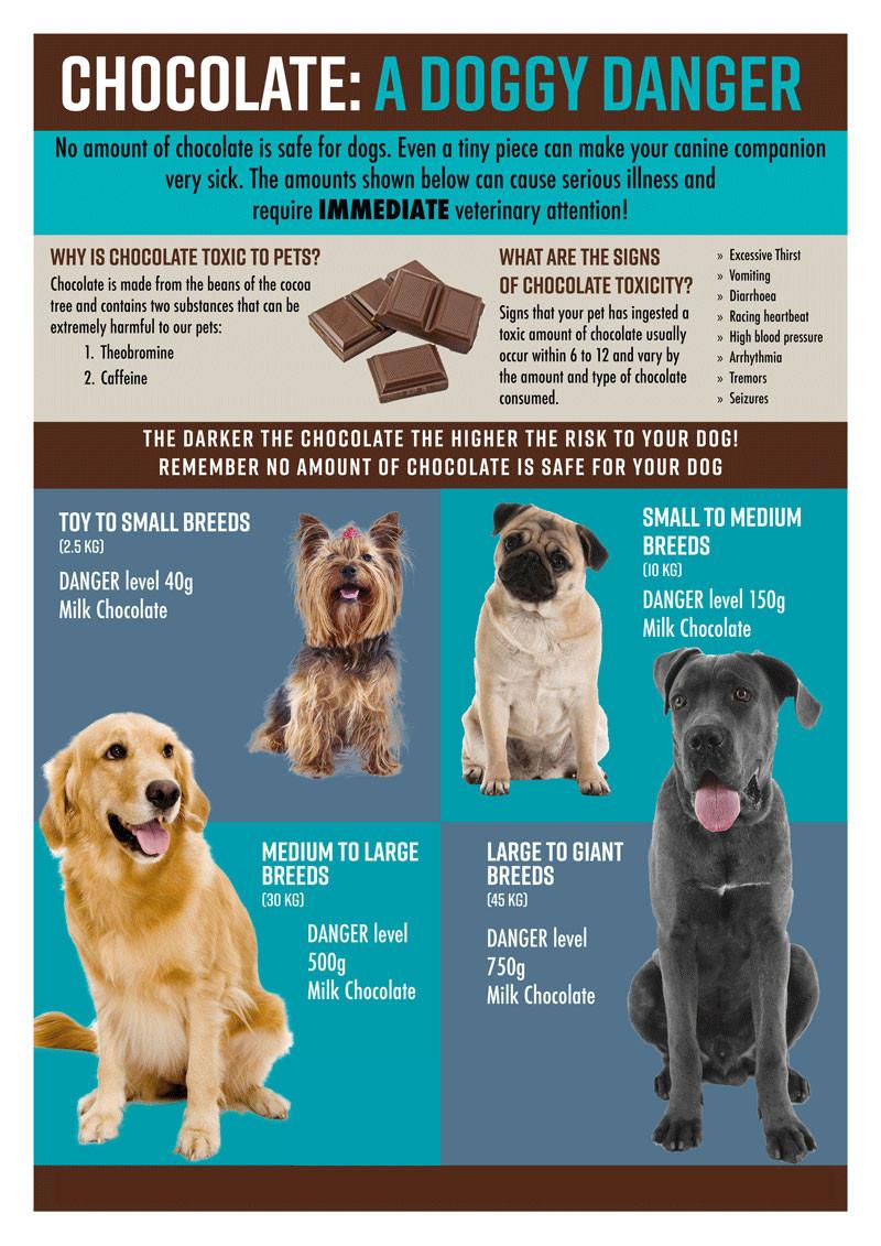 Dog Chocolate Toxicity Infographic