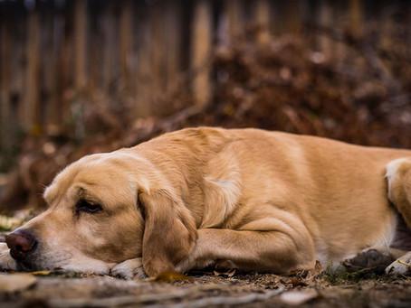 Pet Insurance - should I get it?