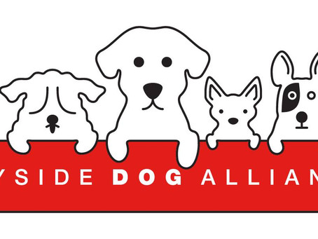 Guest Post: A Word from the Bayside Dog Alliance...