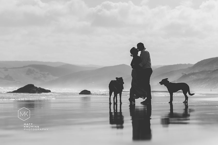 Dogs at beach wedding