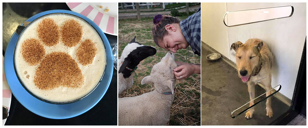 RSPCA Coffee Sheep and Dog