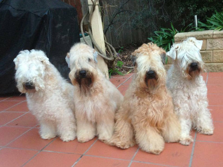 Guest Post: Buying a puppy from a responsible breeder - Part 3