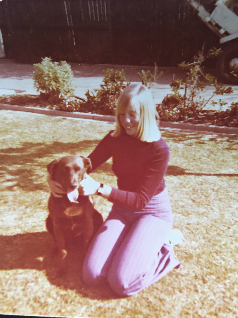 Labrador Kelpie 1970s