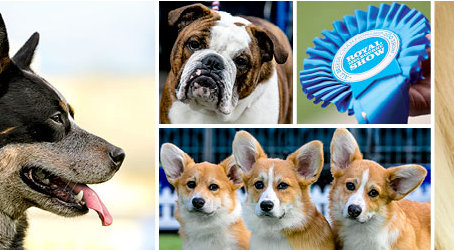 Dogs + The Royal Melbourne Show