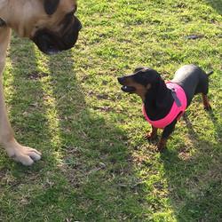 Frankie and Lola