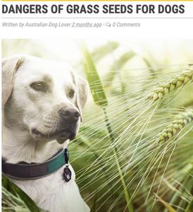 Australian Dog Lover Image
