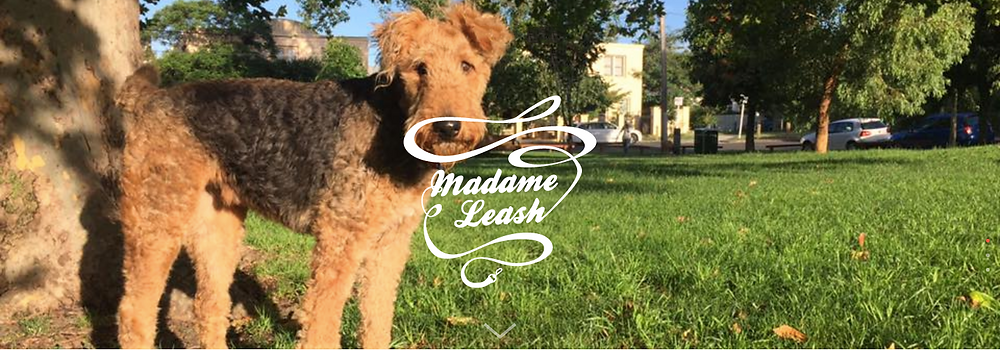 Madame Leash Header Terrier DOg