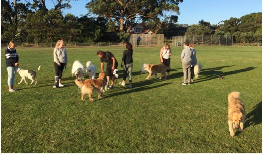 Dogs and humans at off lead park