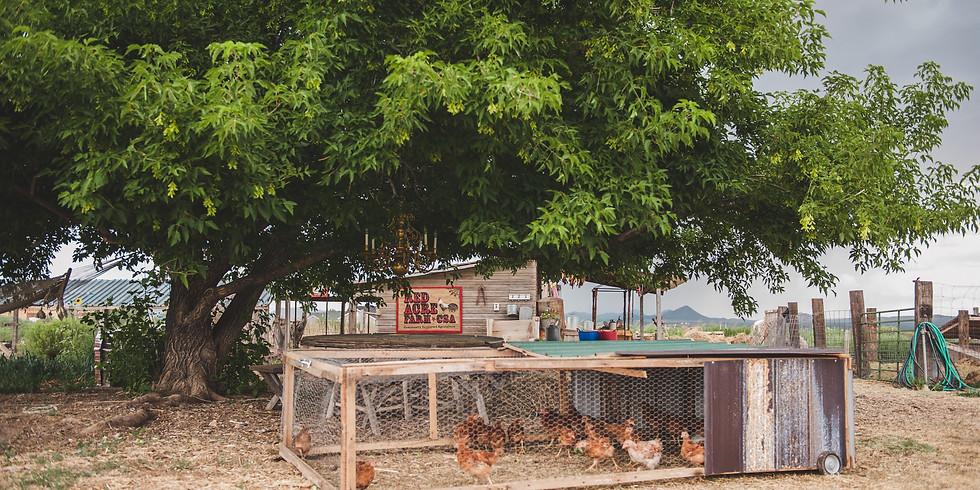 Poultry Butchery