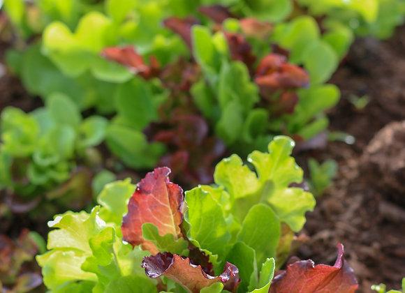 Lettuce Mix Greens 8 oz