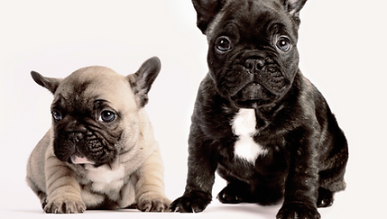 Mardi Gras Dog Names