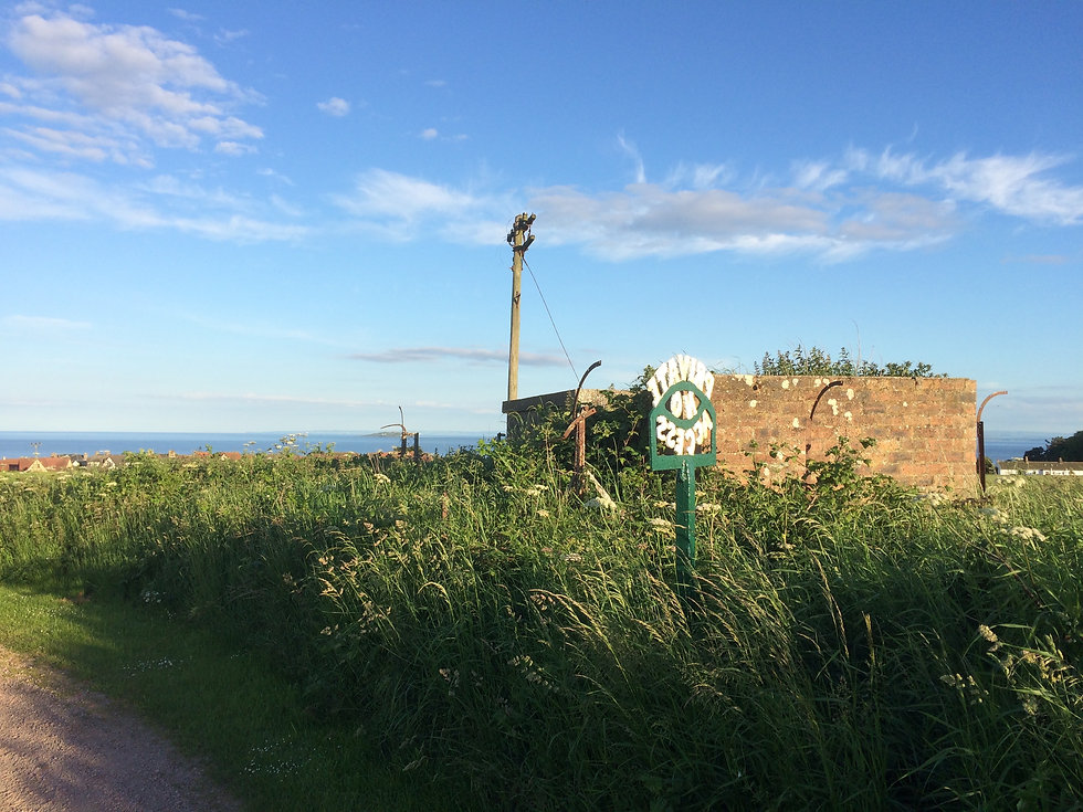 Isle of May Favourite .jpg
