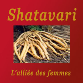 Poudre de Shatavari Bio 200gr