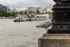 London 28