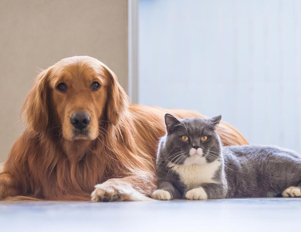 blog-featured-pets_dog_cat-20180328.jpg