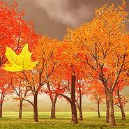 Uma folha amarela - A.jpeg