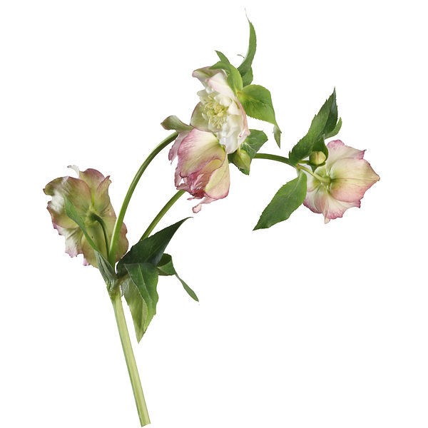 flowers_0029_Layer 21.jpg