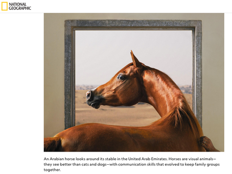 National Geographic: Horses Make Facial Expressions Just Like Humans