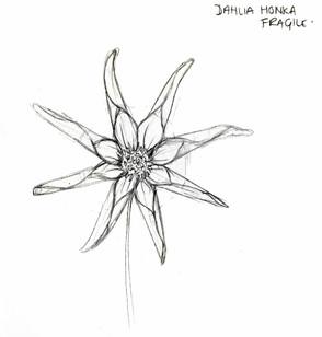 Dahlia Honka Fragile