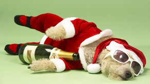 Avoid a Christmas Hangover