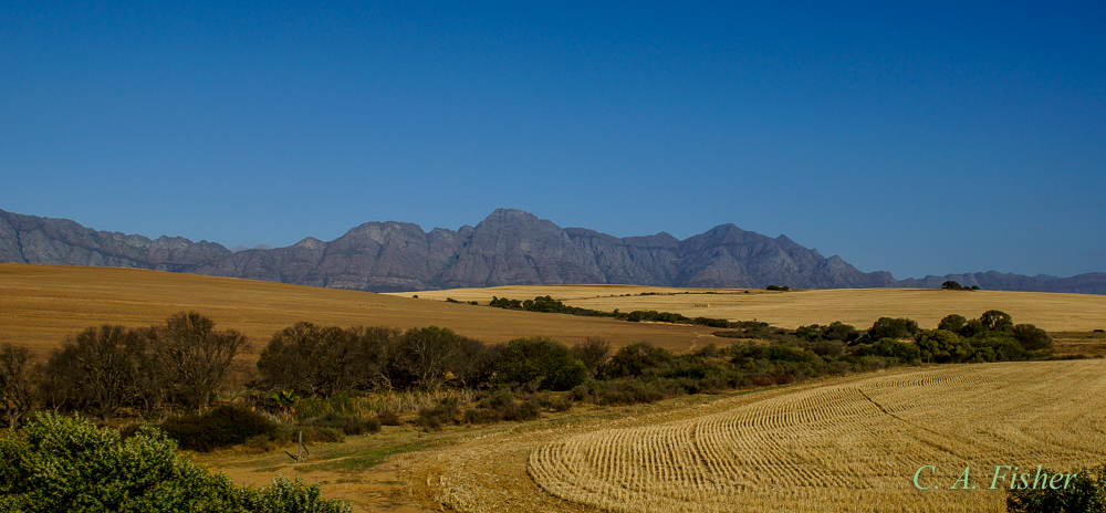 Wheat Fields and Cape Fold Mountains