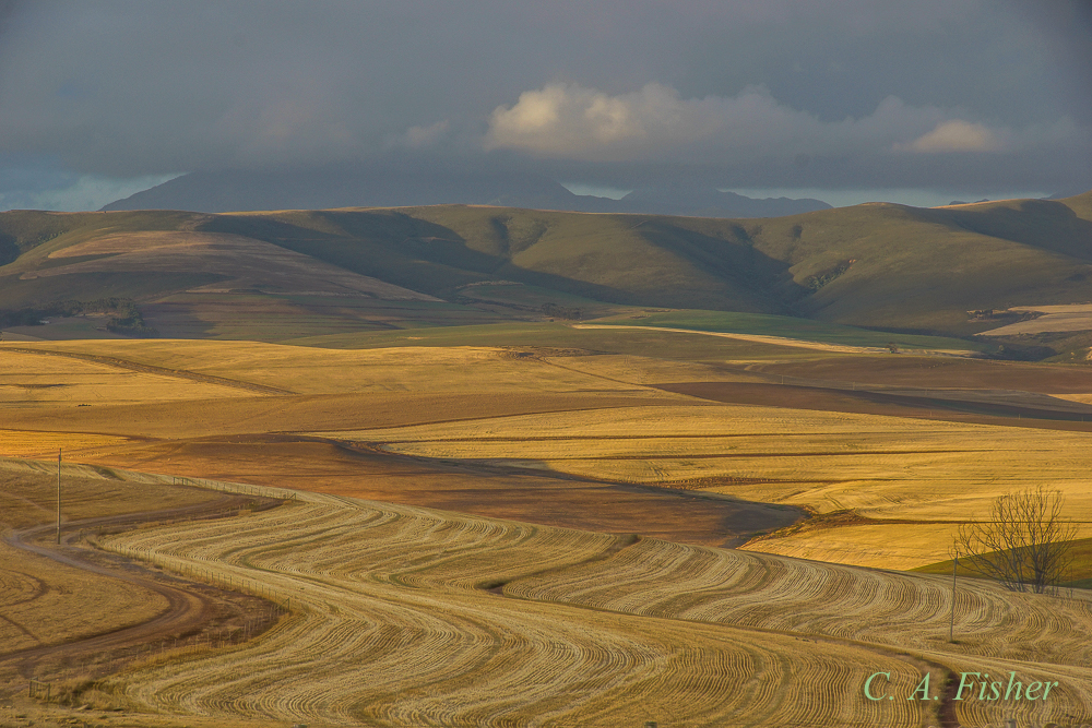 Wheat Fields in Late Afternoon Light