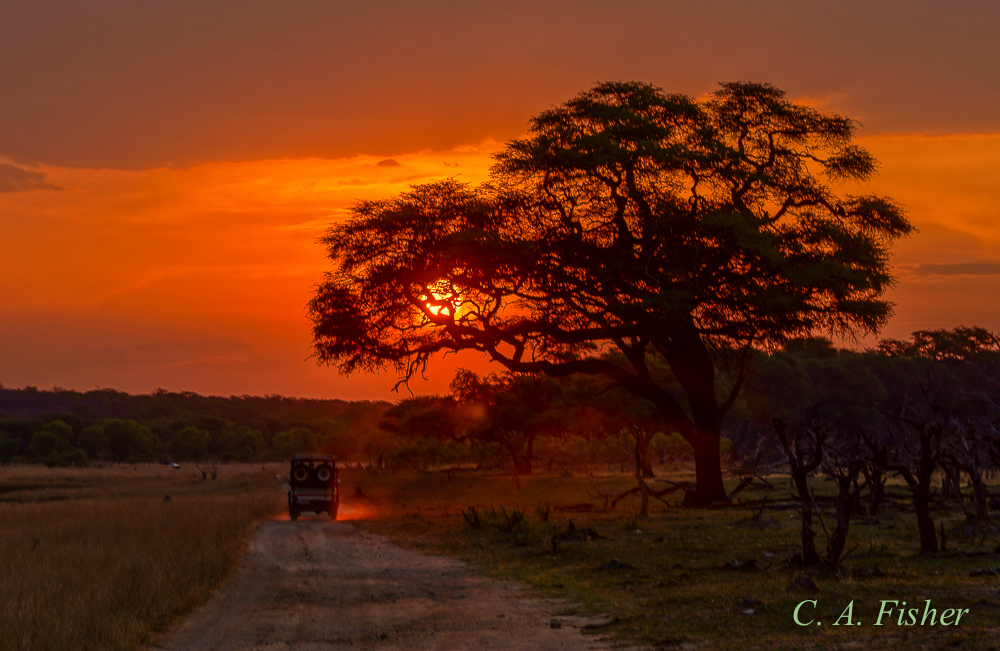 Game Drive at Sunset