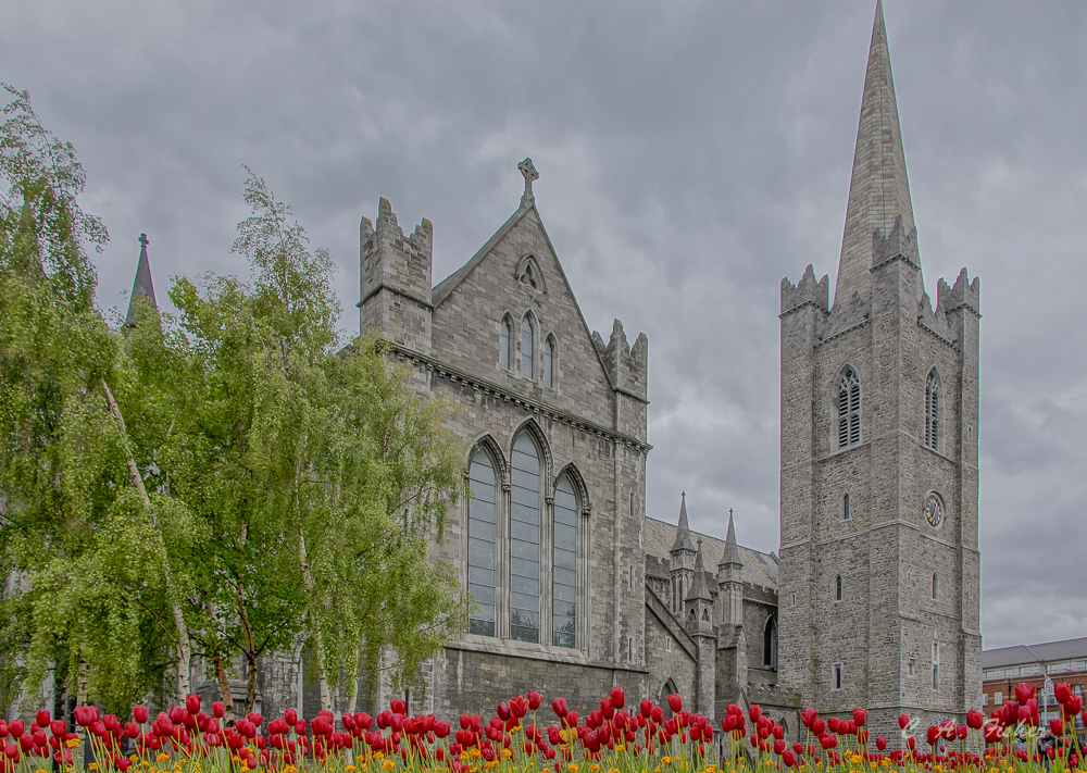 St. Patrick's Cathedral With Tulips