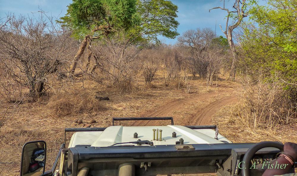 Game Drive Through the Bush