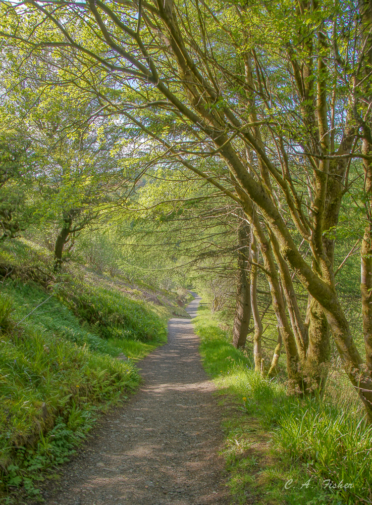 Path in Glenariff Forest Park